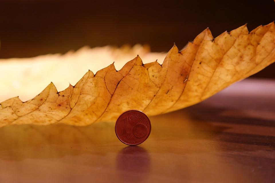 elm-leaf-231857_960_720