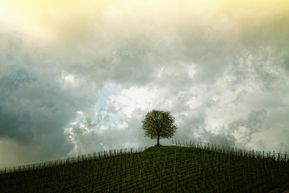 tree-207584_960_720